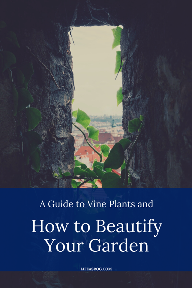 A Guide to Vine Plants and How to Beautify Your Garden