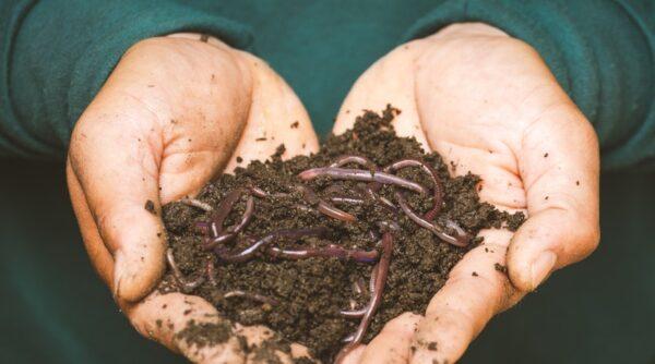 composting garden
