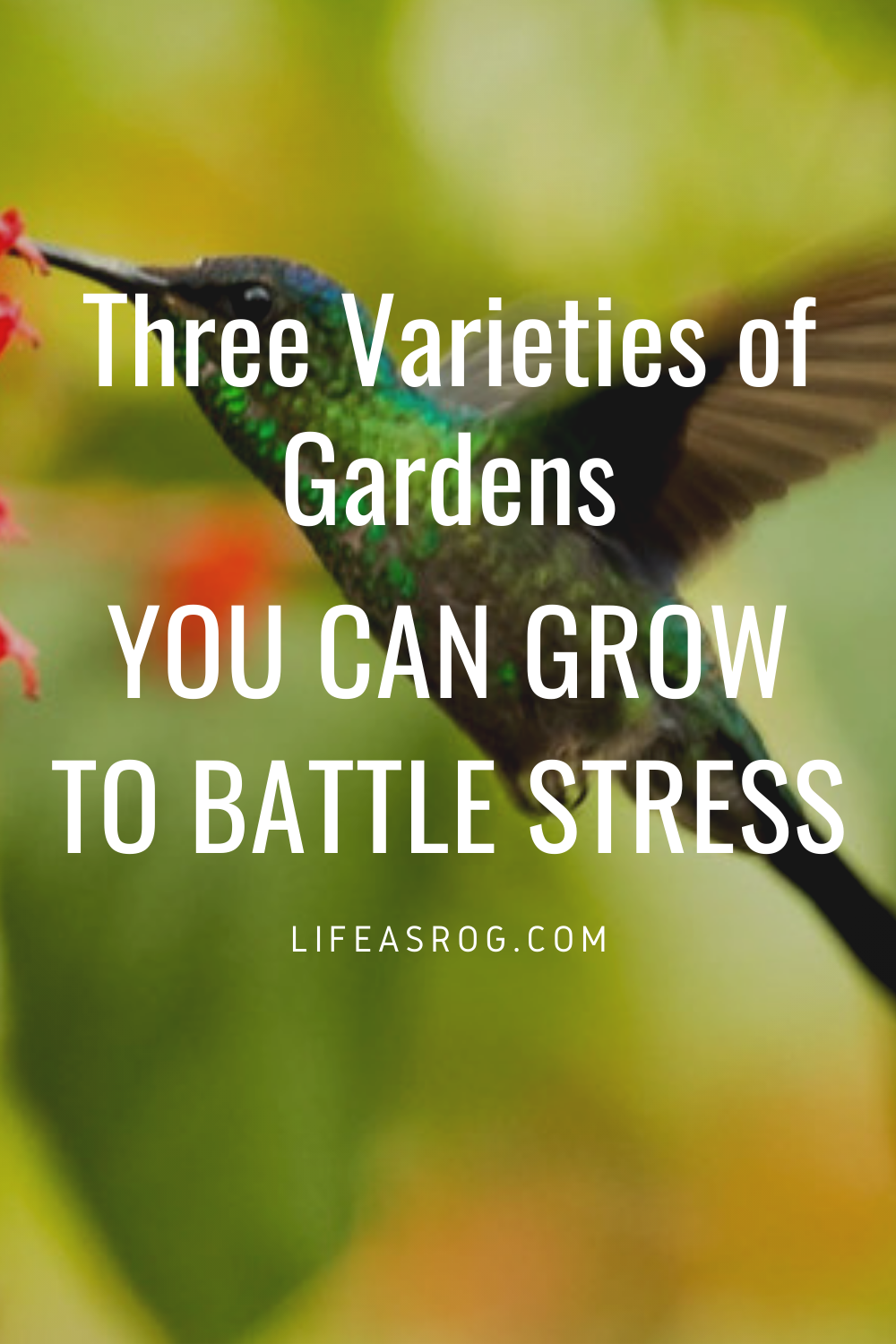 Three Varieties of Gardens You Can Grow to Battle Stress