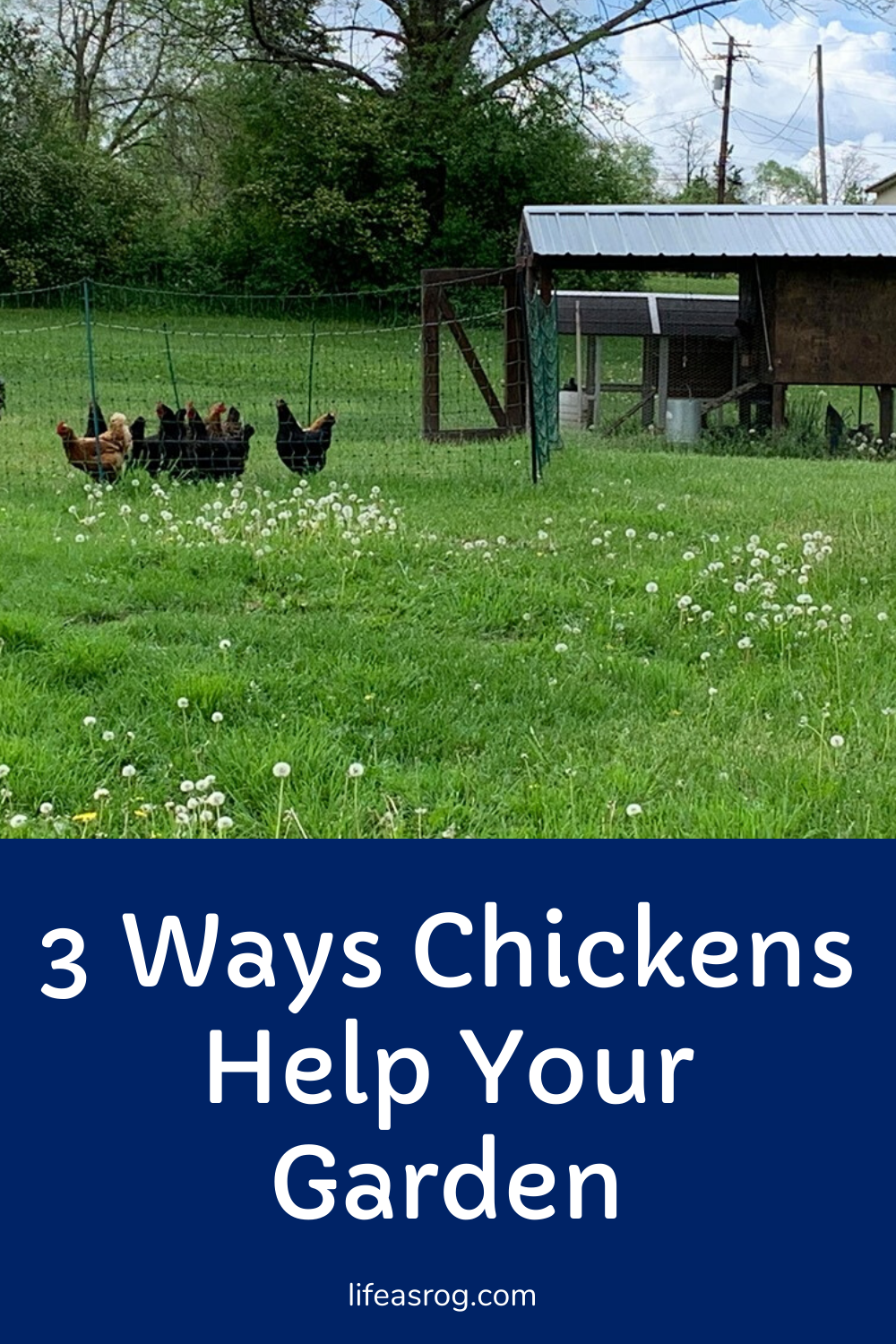 3 Ways Chickens Help Your Garden