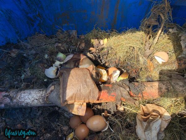 chickens garden