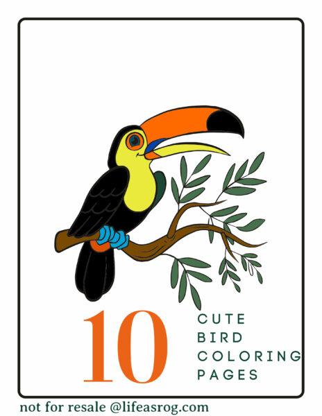 10 cute birds