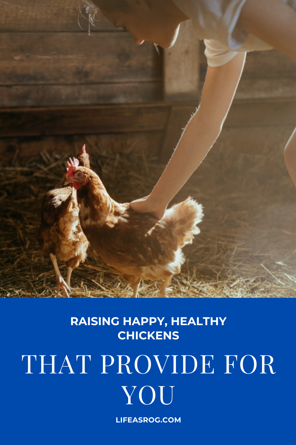 Raising Happy, Healthy Chickens That Provide for You